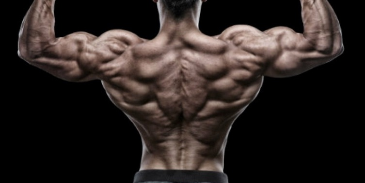 muscle_building_exercises__thick_back_blitz___muscle___fitness